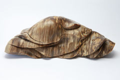 Petrified wood Stock Image
