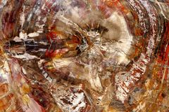 Petrified wood. Abstract color marvel of nature. Royalty Free Stock Images