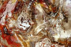 Petrified wood. Abstract color marvel of nature. Stock Image