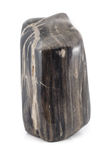 Petrified wood ancient piece black sideview Stock Photography