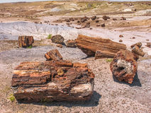 Petrified wood, Arizona Stock Photos