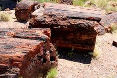 Petrified wood in Arizona National Park. Petrified wood on the ground of Arizona`s National Park royalty free stock photo