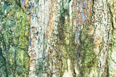 Petrified wood background. Stock Photo