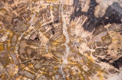 Petrified wood background. Petrified wood section abstract background - studio shot Stock Photos