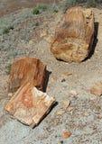 Petrified Wood. Broken fossilized log segment detail Stock Photos