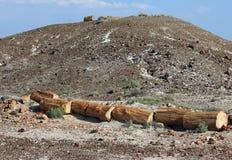Petrified Wood. Broken fossilized tree log segment Stock Photo