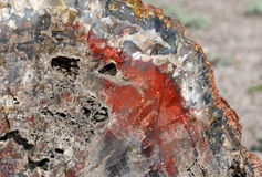 Petrified Wood. Broken fossilized tree log segment detail Royalty Free Stock Images