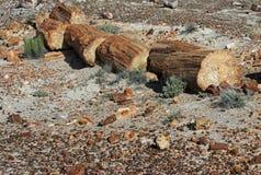 Petrified Wood. Broken fossilized tree log segments Stock Photos