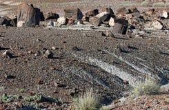 Petrified Wood. Broken fossilized tree log segments Royalty Free Stock Photos