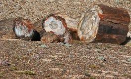 Petrified Wood. Broken fossilized tree log segments Stock Image