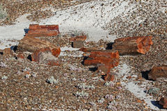 Petrified Wood. Broken fossilized tree log segments Stock Images