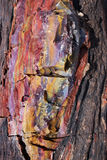 Petrified Wood Royalty Free Stock Image