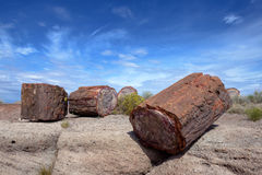 Petrified wood in desert Stock Images