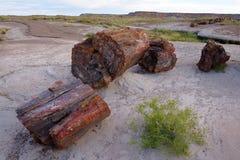 Petrified wood in desert Royalty Free Stock Photo