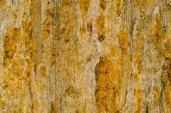Petrified wood detail Royalty Free Stock Photos