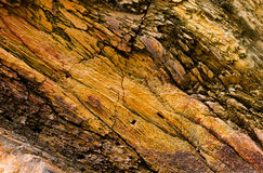 Petrified wood detail Stock Photos