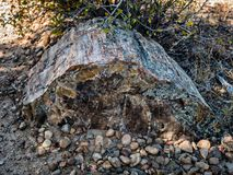 Petrified wood in Escalante Petrified Forest State Park in Utah Royalty Free Stock Photography