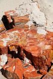 Petrified wood. In the Petrified Forest National Park in Arizona Royalty Free Stock Photo