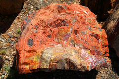 Petrified wood. In the Petrified Forest National Park in Arizona Stock Photo