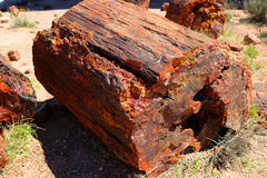 Petrified wood. In the Petrified Forest National Park in Arizona Stock Photos