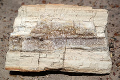Petrified wood. In the Petrified Forest National Park in Arizona Royalty Free Stock Photography