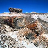 Petrified Wood Fossils Stock Image