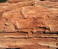 Petrified wood. Grunge petrified wood surface background Stock Photo
