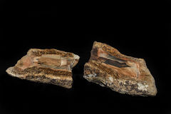 Petrified Wood Inclusion In Algae Fossilized. Split Sections royalty free stock photo