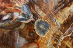 Petrified wood is a kind of fossil Stock Photo