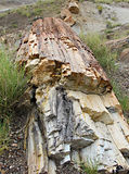 Petrified Wood Stock Photography