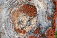 Petrified Wood Log Fossil Close up. Once a large tree now a petrified fossil and cut for everyone to view Stock Image