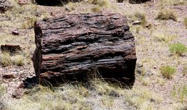Petrified Wood Log stock images