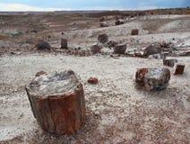 Petrified wood logs scattered across landscape, Petrified Forest National Park, Arizona, USA Royalty Free Stock Photo