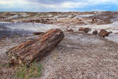 Petrified wood logs scattered across landscape, Petrified Forest National Park, Arizona, USA Royalty Free Stock Images