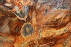 Petrified wood from Madagascar Stock Photo