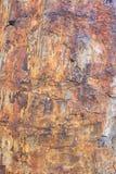 Petrified wood Royalty Free Stock Photo