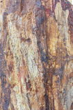 Petrified wood Royalty Free Stock Photography