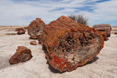 Petrified Wood at Petrified Forest National Park Royalty Free Stock Images