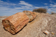 Petrified Wood at Petrified Forest National Park Stock Images
