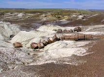Petrified Wood at Petrified Forest National Park, Arizona, USA royalty free stock photo