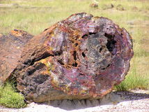 Petrified Wood at Petrified Forest National Park, Arizona, USA Stock Photo