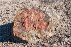 Petrified wood, Petrified Forest National Park, AZ, US stock image