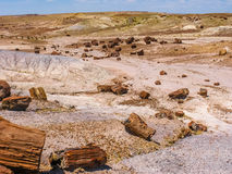 Petrified Wood at Petrified Forest National Park Stock Photo