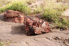Petrified Wood, Petrified Forest Np, Arizona Stock Photos