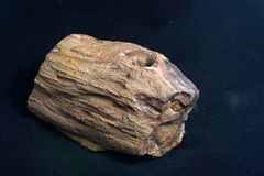 Petrified wood Royalty Free Stock Images