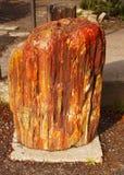 Petrified Wood. A piece of red-orange colour petrified wood. Arizona Stock Photography