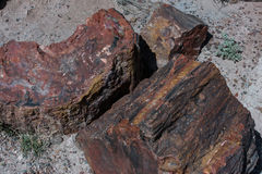 Petrified wood resting in the desert. Royalty Free Stock Images