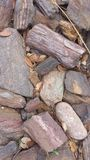 Petrified wood. Rocks petrified wood Stock Photo