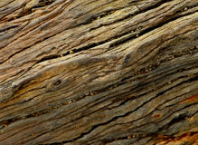 Petrified wood stone Stock Photo