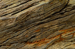 Petrified wood stone Stock Image
